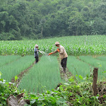 Lisu Hill Tribe Experience