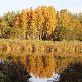 Signs of Fall by Rose McAllister - Landscapes Waterscapes ( reflection, adventure, nature, fall, landscape,  )