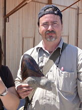 Photo: A fossile giant shark tooth from the Megalodon species. Sells for $150 in the village Paracas. Though tooth like this are found in that area, this one was suspicious heavy. It wasn't bought as generally the problem is, you are not allowed to export fossils and ancient cultural objects from Peru!