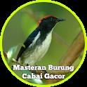 Masteran Burung Cabai Gacor Lengkap icon