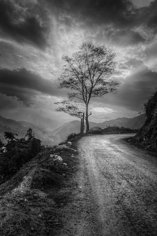 Lonely tree by Fxhfh Eyrndj - Black & White Landscapes ( sky, tree, sunset, cloud, road, light )