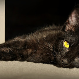 L golden eyes by B Lynn - Animals - Cats Kittens ( dark, little, blacks, felines, black,  )