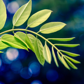 blur by Ira Mdt - Nature Up Close Leaves & Grasses ( #leaves #bokeh #green,  )