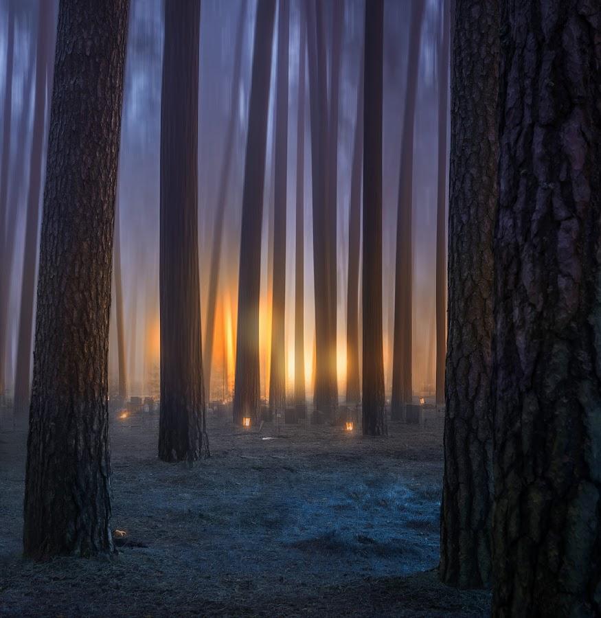by Kennet Brandt - Landscapes Forests