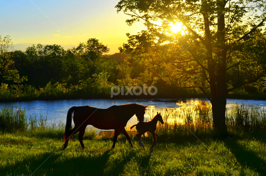 Mom and Me by Teza Del - Animals Horses