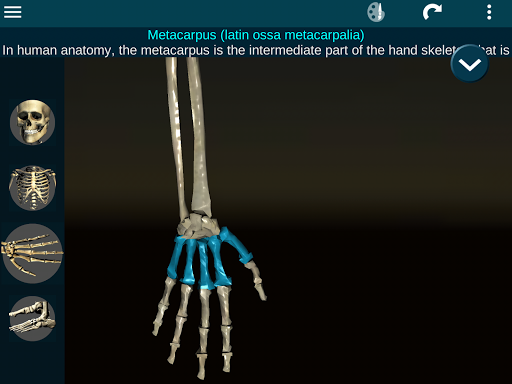 Bones Human 3D (anatomy) Screenshot