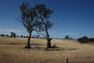 Photo: Year 2 Day 226 - Parched Fields
