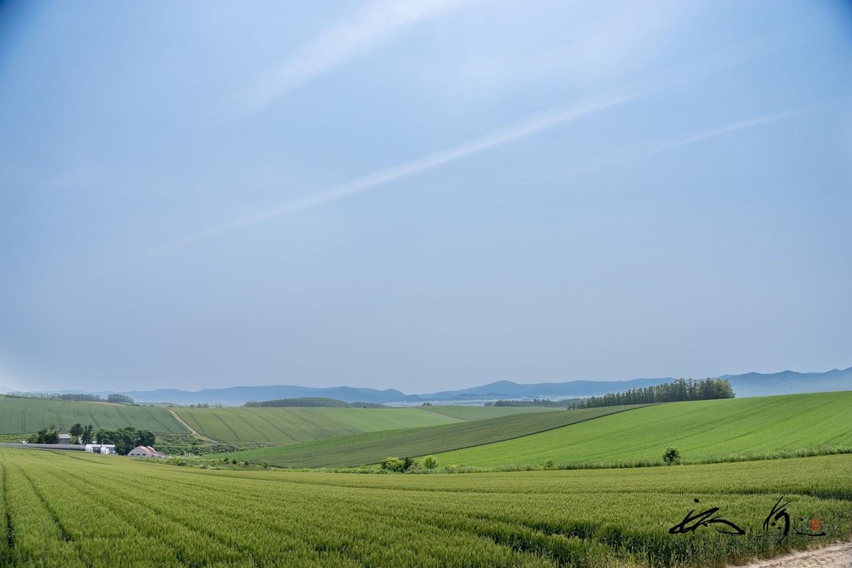 爽やかな初夏の風が吹き渡る風景