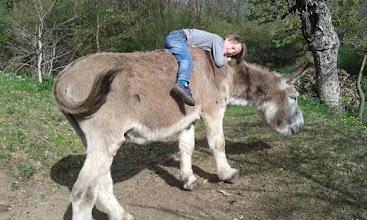 Photo: Complicité....avec l'âne Carotte