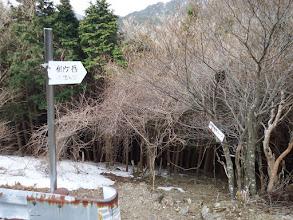 仙ヶ岳(仙鶏尾根)分岐