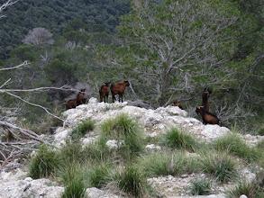 Photo: Cabras