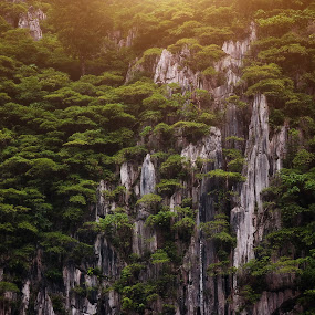 Trees grow on hill rock cliffs by Muslim Hanafi - Landscapes Mountains & Hills ( forest, sunrise, beauty, sunshine, asia, clouds, trees, hiritage, sun, cloud, hill, background, land, travel, landscape )