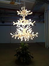Photo: Lights
