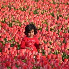 Tulips by Els He - Babies & Children Child Portraits ( nederland, toerismenederland bloemenvelden, holland, bloembollenvelden, tulpen,  )