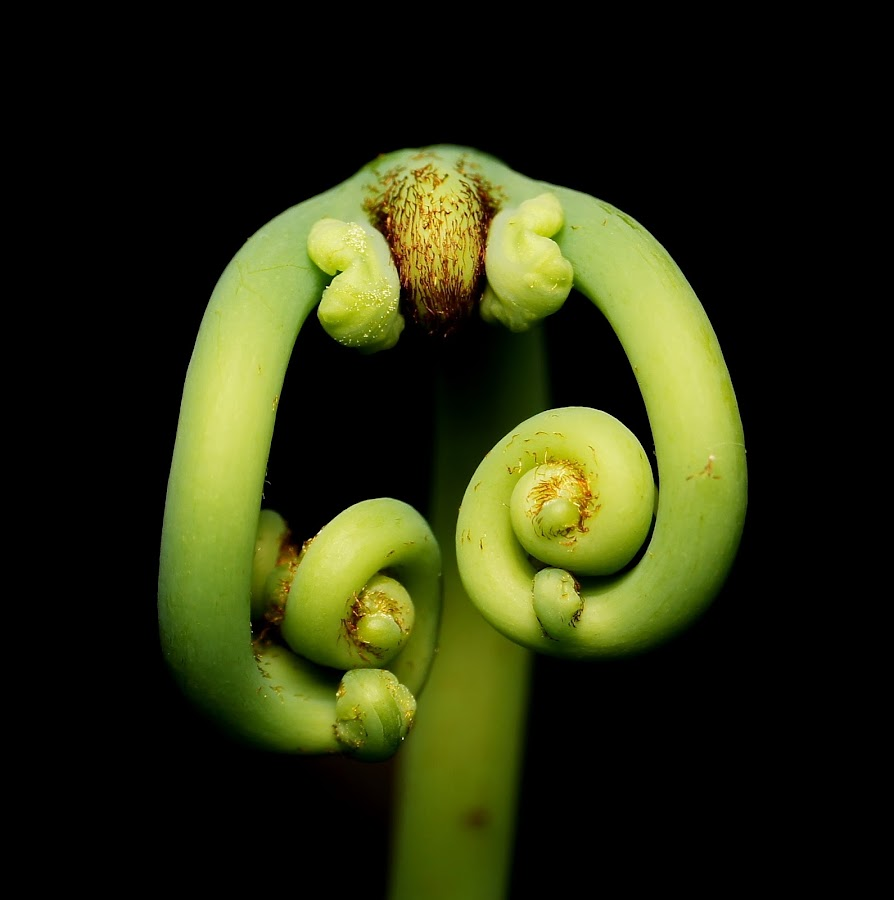 by Bani Hasyim - Nature Up Close Other plants