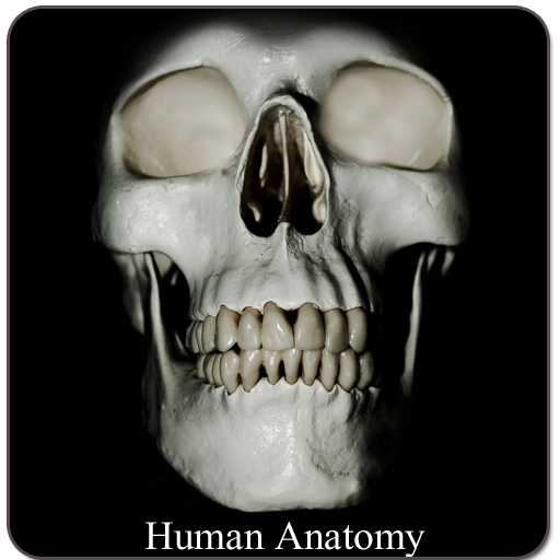 Human Anatomy (Spotting)