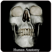 Human Anatomy (Spotting)