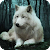 White Wolf Live Wallpaper file APK for Gaming PC/PS3/PS4 Smart TV