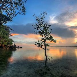 Peace by Geoffrey Wols - Landscapes Sunsets & Sunrises ( cloud, sunrise, beach, sunset, tree, philippines, water, sun,  )