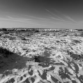 sand by Paulo Rodrigues - Black & White Landscapes ( b&w, cabanas, sea, viagem, photo, nuvens, shadows, céu, sky, tree, nature, sombra, natureza, árvore, algarve, mar )