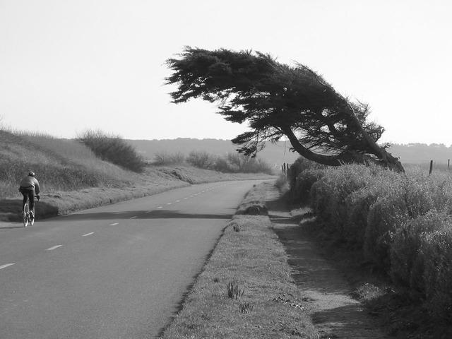 tree-1667_640.jpg