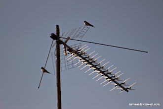 Photo: Aerial Romance 4...Square 1