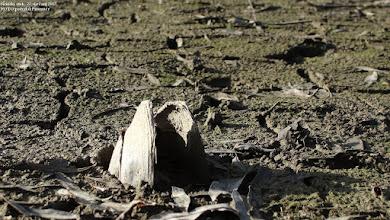 Photo: Širinski otok, 22.siječanj 2012.