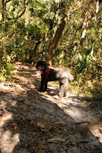 Photo: Odie on the Nature Trail