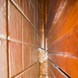 El zorrito escondido by Annette Flottwell - Animals - Cats Kittens ( gato, orange, marmelade, ginger, rojo, gatito,  )