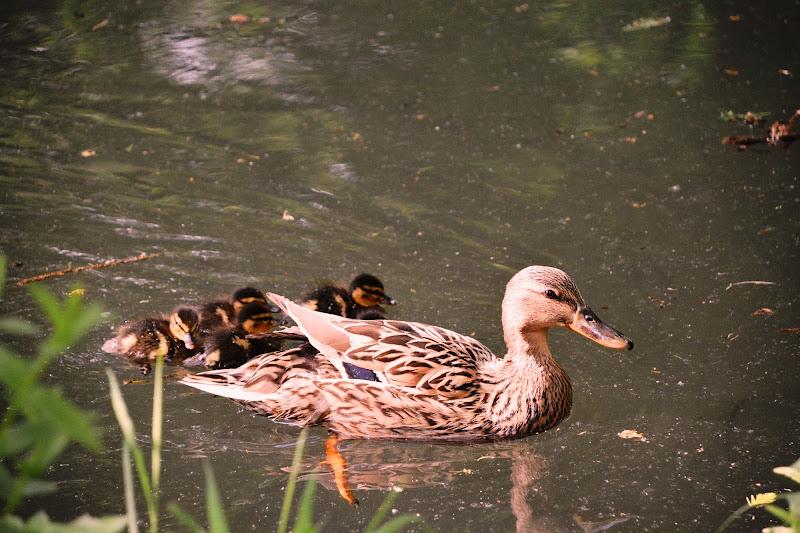 mamma con  i suoi piccoli di lando