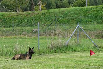 Photo: Lama püsis vaatamata teise koera trikidele kindlalt!