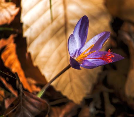 fiore d'autunno di Zerosedici