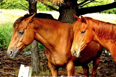 Noi, i cavalli di elChileno