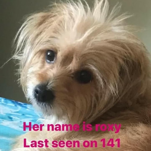 Roxy, MISSING Jan 26, 2020