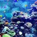 Aquariums Wallpapers HD Fish! icon
