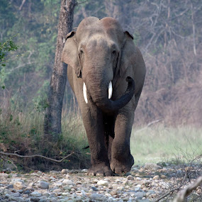 by Arun Baweja - Animals Other Mammals