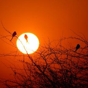 Sunrises by Vivek Naik - Landscapes Sunsets & Sunrises