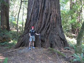 Photo: wieder ein Riesenbaum (ein Red Wood)