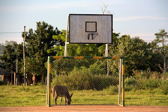 Photo: play some football, er, basketball, er, pin the tail on the donkey?