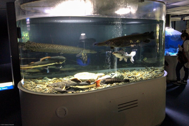 世界の淡水魚