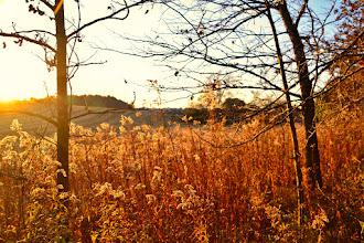 Photo: Golden Harvest