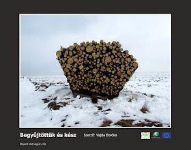 Photo: RO: L-am adunat și gata Taiem copacii de sub noi.  EN: Harvested and done We cut the trees under us.