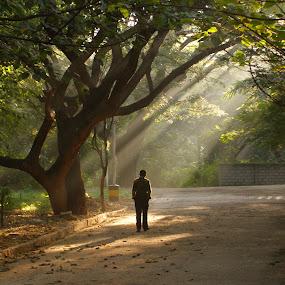 The enlightened one by Victor Mukherjee - People Portraits of Men ( tree, sunrays, morning, light, man )