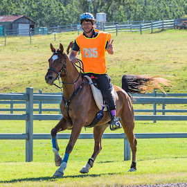 Champion by Sarah Sullivan - Sports & Fitness Other Sports ( #pose, #fei, #sarahsullivanphotography, #stirling's crossing, #endurance )