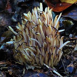 by Mike Dinkens - Nature Up Close Mushrooms & Fungi