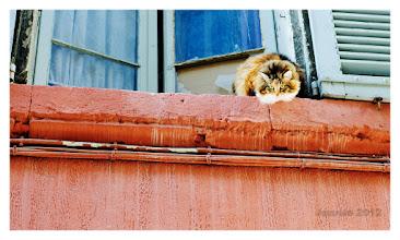 Photo: Die Katze von Avignon