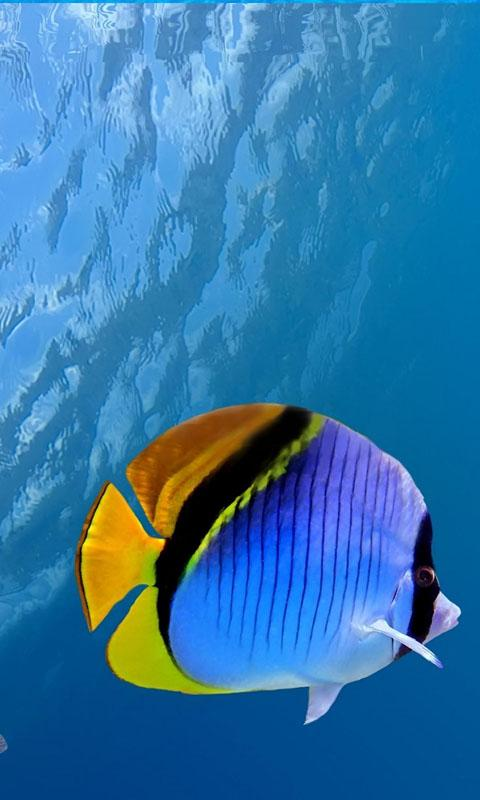 Hd Ocean Fish Live Wallpaper Android Apps On Google Play