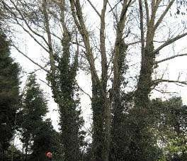 tree felling service in Herefordshire