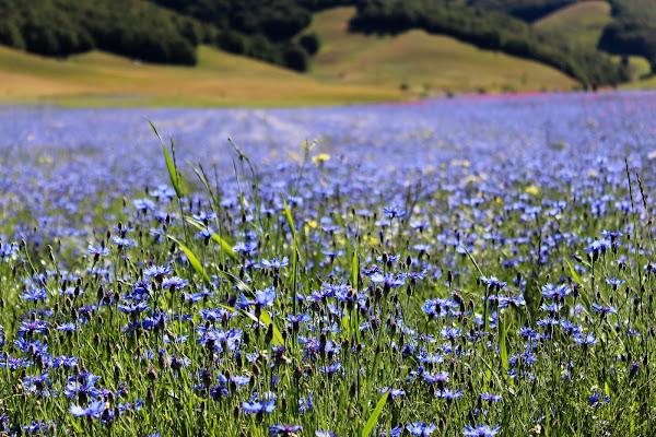 fiori in terra di andreaparenti16