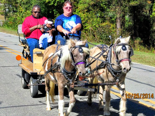 Bell & GG pull Pioneer pony wagon, 1/2 ton gear